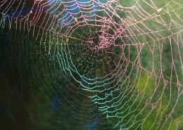 蜘蛛网高清图片_12张