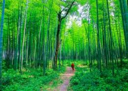 翠綠的竹林圖片_14張