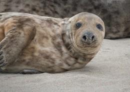 一只可愛的海獅圖片_12張