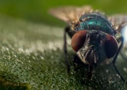 苍蝇微距摄影图片_15张