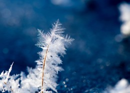 冬季冰雪圖片_16張