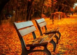 秋天公園里的長椅圖片_9張