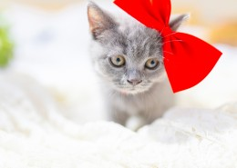 可爱灰色小猫图片_10张