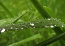 綠葉上的水珠圖片_16張
