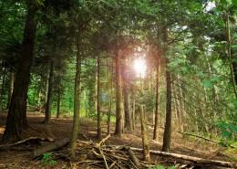 茂密的森林圖片_16張