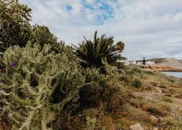 来自葡萄牙的植物图片_12张