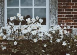 花園里的小花圖片_14張