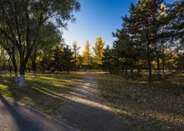 北京奧林匹克森林公園的秋天樹林自然風景圖片_10張
