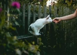 乖巧可爱的猫咪图片_19张