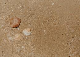 沙灘貝殼和小石子的圖片_10張