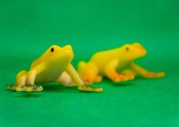 迷你青蛙玩具图片_11张