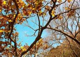 唯美的秋叶风景图片_9张