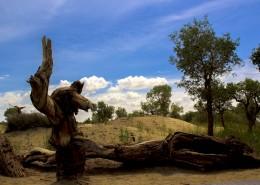 新疆羅布人村寨自然風景圖片_10張