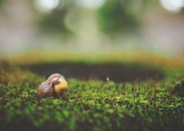 行动缓慢的蜗牛图片_10张