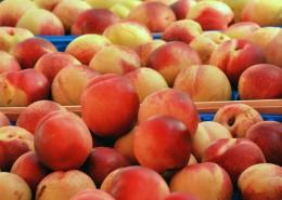 新鲜好吃的桃子图片_11张