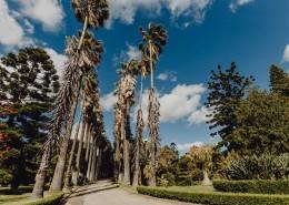 葡萄牙熱帶植物園的圖片_10張