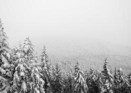 冬季白雪覆盖的森林图片_16张