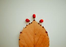 泛黄的树叶图片_11张