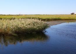 内蒙古呼伦贝尔湖自然风景图片_10张