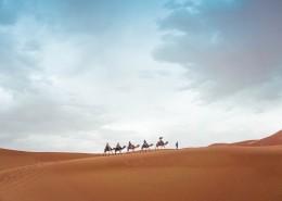 驮着人的骆驼图片_11张
