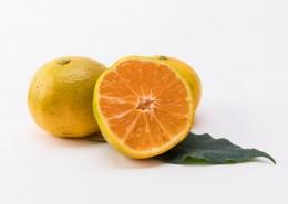 美味的橘子图片_10张