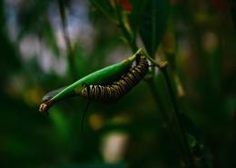 蠕动的毛毛虫图片_12张