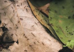 勤劳的蚂蚁图片_13张