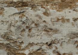 破旧的木头背景素材图片_9张