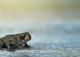 不同种类的青蛙图片_14张
