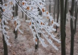 冬日树枝上的雾凇图片_11张