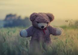 可爱的泰迪熊玩具图片_10张
