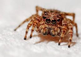 毛茸茸的蜘蛛图片_10张