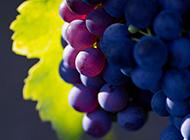 誘人葡萄滿掛枝頭可口水果圖片