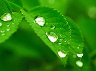 绿色清新护眼植物春日气息图片