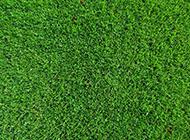 綠色漂亮的草坪護眼背景圖片
