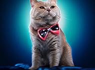 可爱的猫咪高清动物壁纸