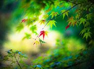 綠色夢幻唯美葉子圖片背景圖片