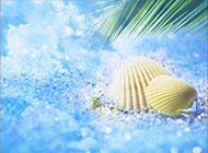 沙滩贝壳浪漫素雅风格背景图片素材