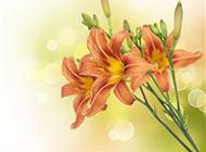 唯美百合花背景圖片素材