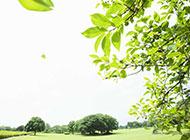 春天浪漫嫩綠淡雅背景封面