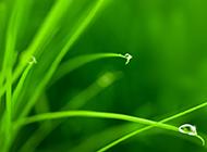 精選綠色植物水滴背景素材