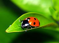 可爱昆虫3d绿色护眼桌面壁纸
