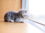 軟萌小奶貓可愛桌面背景壁紙圖片