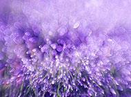 梦幻紫色花卉背景唯美图片