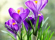 绚丽紫色的花朵高清壁纸