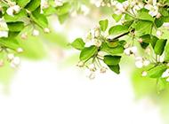 简单唯美的花朵背景图片