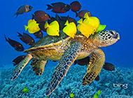 高清颜色自然界动物壁纸图片