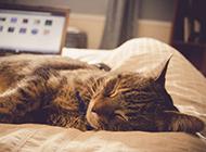 可爱猫咪打盹壁纸