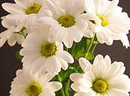唯美小清新花卉植物壁紙