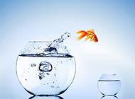 鱼缸小清新背景图片大全